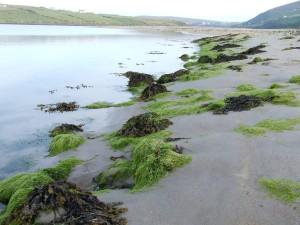 vibrant_seaweed